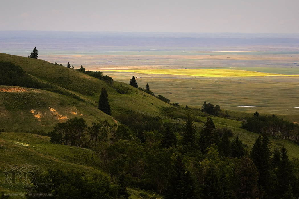 Cypress Hills 2007: The view