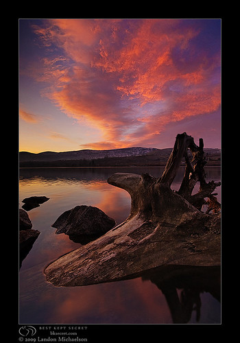 Stumped Sunrise