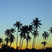 Palm Silhouette by pilz8