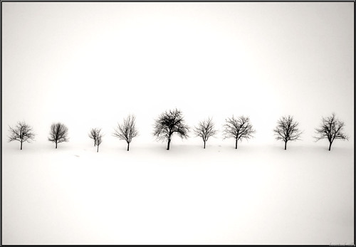 the memory of trees...