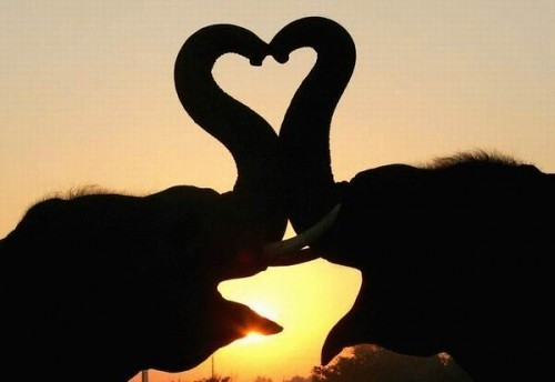 elephant trunk heart