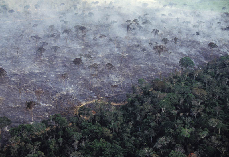 Amazon rainforest deforestation_Ecde0509