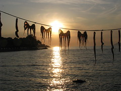 Octopuses at sunset