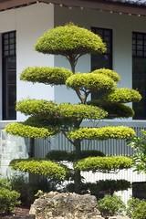 Tree outside museum