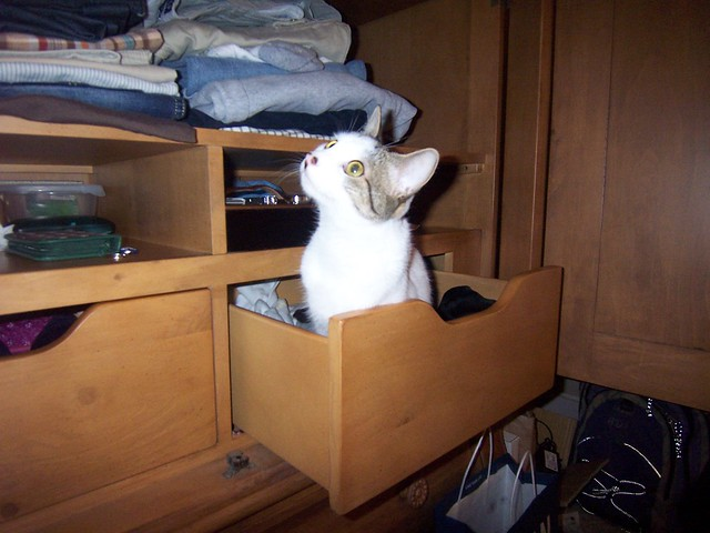 pfluff in a drawer
