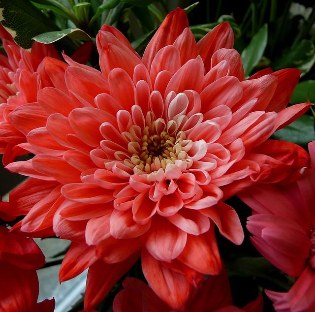 Wedding Anniversary Flowers 30 Years Flickr Photo Sharing