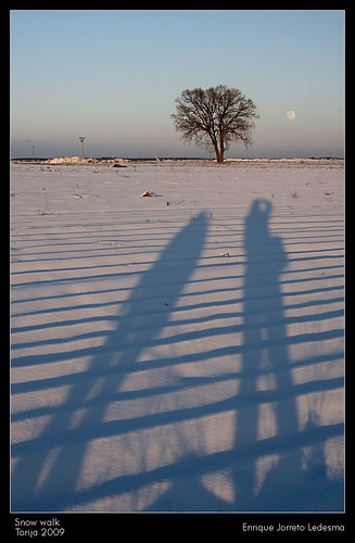 The moon, the tree and us