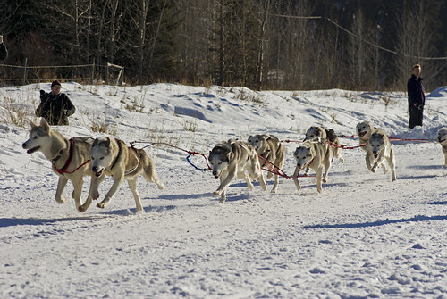 3216540629 44d41ec837 Nice Sled Dog Racing photos