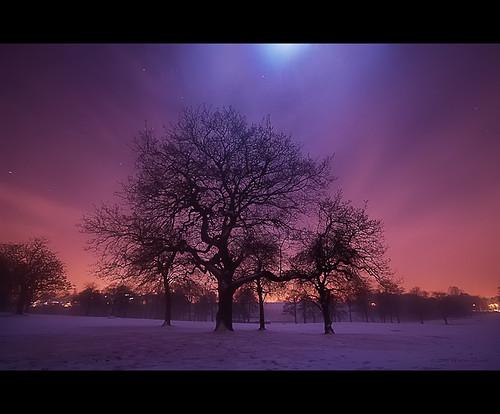 longexposure winter sky moon snow tree love night stars leeds valentine romance canon350d mystical magical roundhaypark westyorkshire lightpollution warrendavies flickrclassique' peregrino27newvision