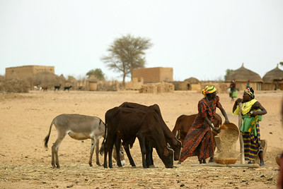Women thresh grain in Niger