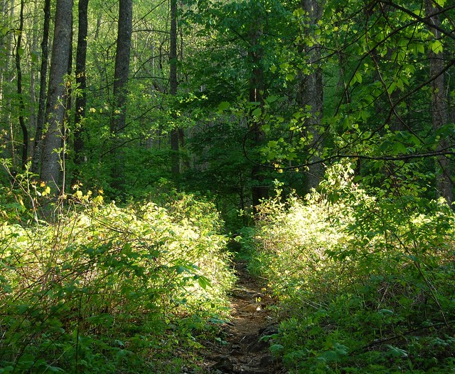 The forest floor at sosebee cove scenic area for Chattahoochee floor