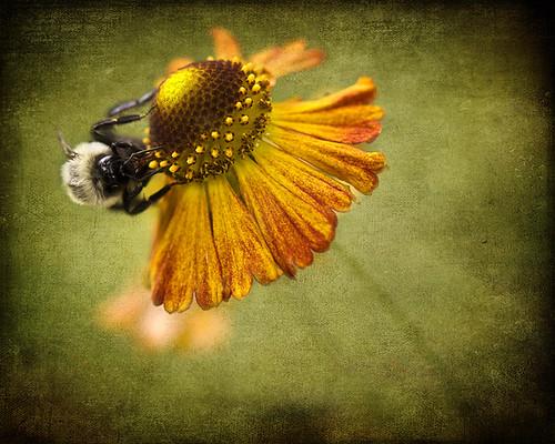 Hunting Pollen