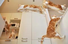 No flies in our kitchen....