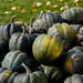 Small photo of Acorn Squash