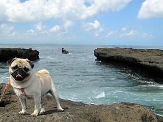 Imagen de Echo Beach. bali beach pug