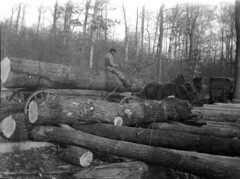weapon(0.0), cannon(0.0), logging(1.0), wood(1.0), vehicle(1.0), monochrome photography(1.0), monochrome(1.0), black-and-white(1.0),
