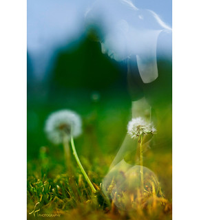 i dream of me, a wisp of a presence in the world of dandelions - 3/52