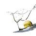 olive oil by Ali Almukhaizeem