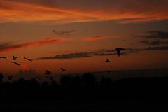 Bay County Park Nassau County Park Bay Park Bay Park NY sunset water