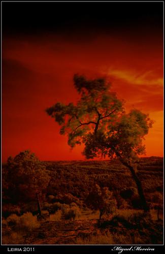red color tree portugal nature photoshop natureza vermelho infrared arvore iv infra leiria efex doublyniceshot doubleniceshot mygearandme mygearandmepremium mygearandmebronze mygearandmesilver mygearandmegold mygearandmeplatinum