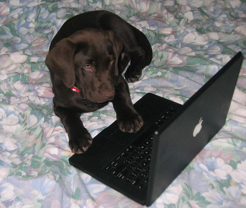 Chocolate Lab Apple Macbook