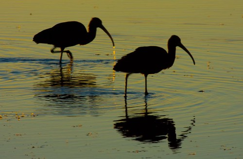 nature sunrise florida wildlife merrittisland