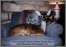Deer in the Chair