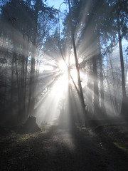 Sunshine Through The Fog