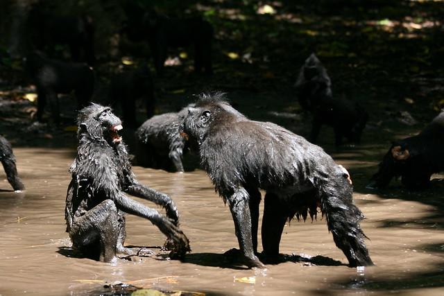Juveniles playing in water