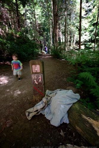 squatter debris?   walking in the humboldt redwoods    MG 1156
