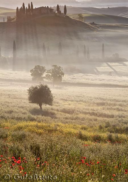 Tuscany Belvedere Sunrise