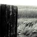 Kittitas Oats and Fence Post