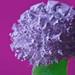 Tums Antacid Flower