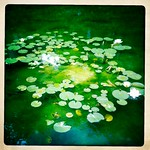 Spitalfields Waterlillies