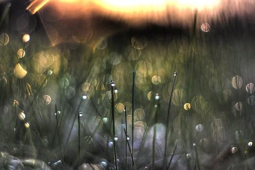 10 Amazing Photos of ... Grass?
