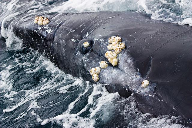 whale genitalia flickr photo sharing