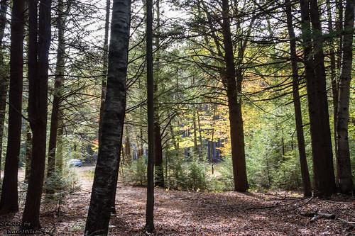 unitedstates newhampshire foliage manmade paths rindge
