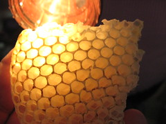 honeycomb, yellow, macro photography, lighting,