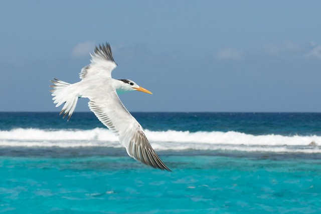 Seabird by the Reef