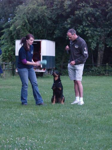 Quick And Simple Training Tips For Dogs! 2