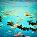 Underwater Memories by Ali Johnson (Photography)