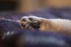 Millie's paw