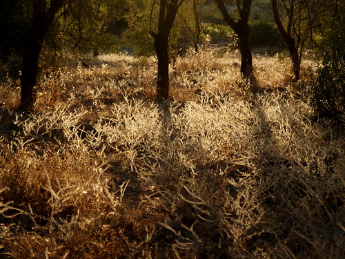 sunset grass cyprus