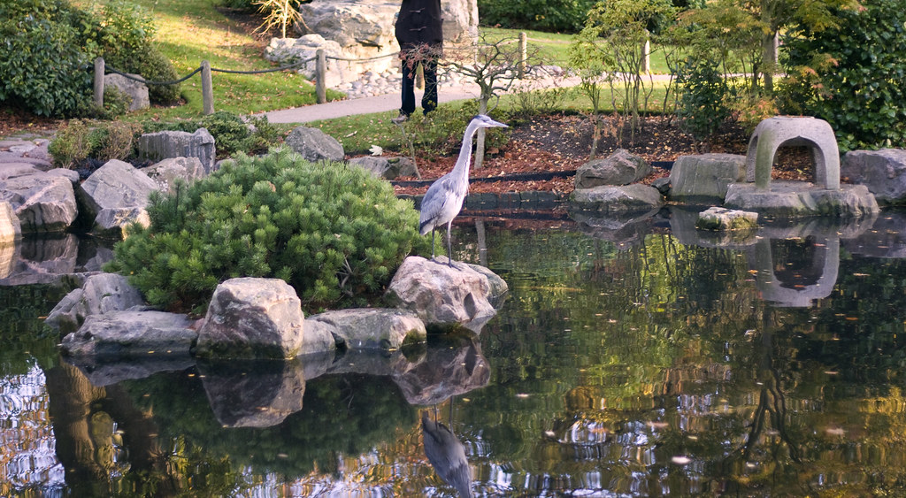 Opinion you kyoto japanese garden will not