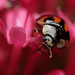Variable 10-spot ladybird  by Lord V