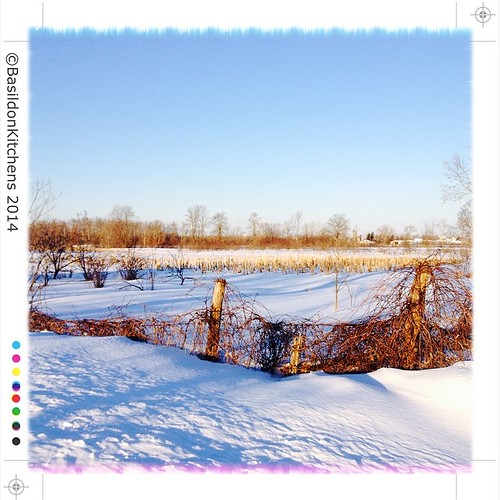 7/3/2014 - field {last year's corn at the edge of an d orchard} #photoaday #field #rural #princeedwardcounty #ctyrd1 #winter #snow #sunrise #corn #orchard