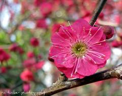 j c raulston arboretum 2009