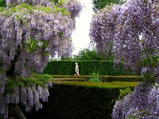 Through the Wisteria at Sissinghurst