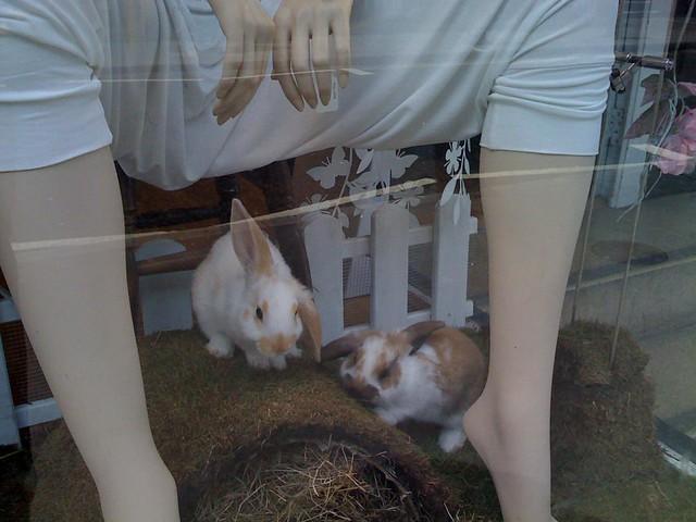 Bunny boiler dating