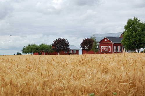 red barn landscape farm wheatfield willamettevalley salemoregon silvertonoregon edmundgarman